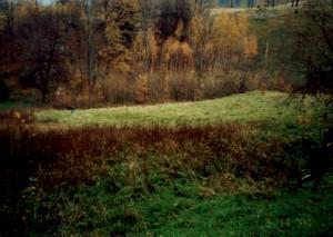 Sosnówka - widok na działkę z góry