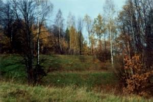 Sosnówka - widok na stok - górna część działki